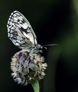 white butterfly on plant macro