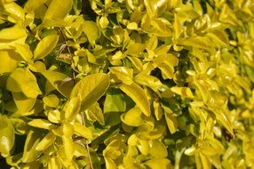 Yellow leaves bush green nature plant