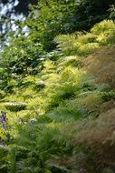 Sunshine forest plant ferns nature green