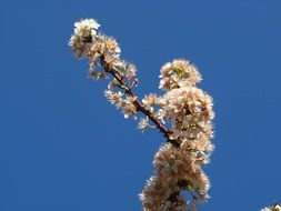 branch with flowers against a blue sky