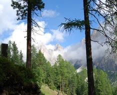 green forest in Dolomites