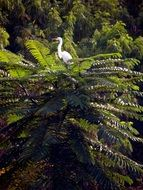 white heron on a tropical plant