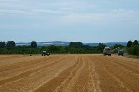 harvest field with cereals crop landscape
