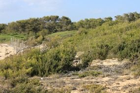 green plants in the desert in Mallorca