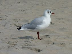 seagull on the sand on the coast of the north sea
