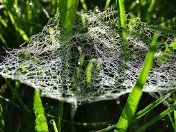 magnificent cobweb