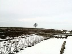 winter field snow nature tree