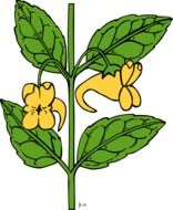 green impatiens drawing