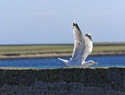 white seagull in flight on a sunny day