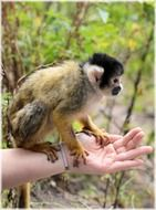 squirrel monkeys monkey zoo series
