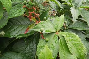 Raindrops on a leaves