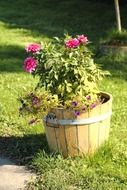 garden flowers in a wooden tub