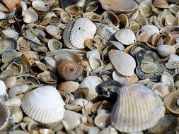 sand with shells on the beach