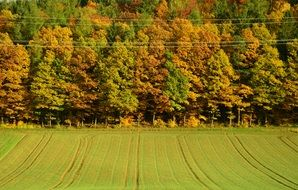 rural field on a background autumn forest