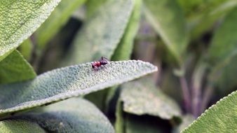small red ant on green leaf