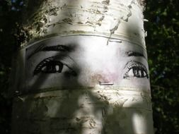 art on a birch in stockholm