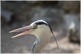 heron bird head