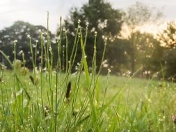 nature grasses dew meadow