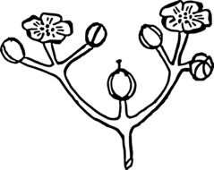 Black and white drawing of the branch with the flowers clipart