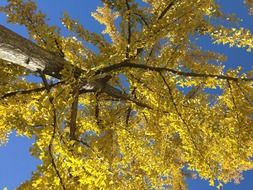 bottom view of a tree in golden foliage