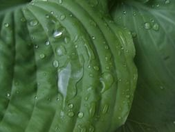 green leaf in rain drops close up