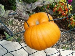 pumpkin fence deco