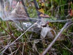 dramatic cobweb autumn closeup