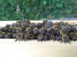 lot of bees in pile on wooden surface