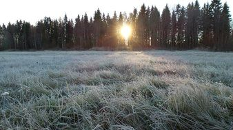 grass in frost