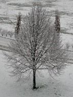 lonely snow-covered tree