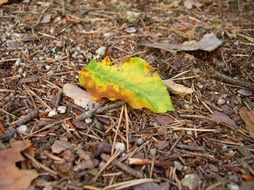green leaf on the ground