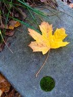 extraordinarily beautiful yellow leaf