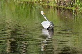 heron bird fishing