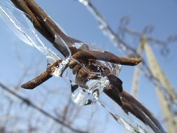 barbed wire in ice