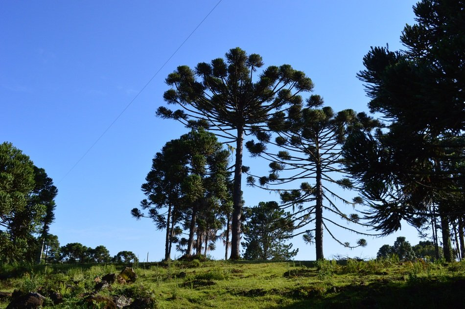 picturesque nature on pinheiro