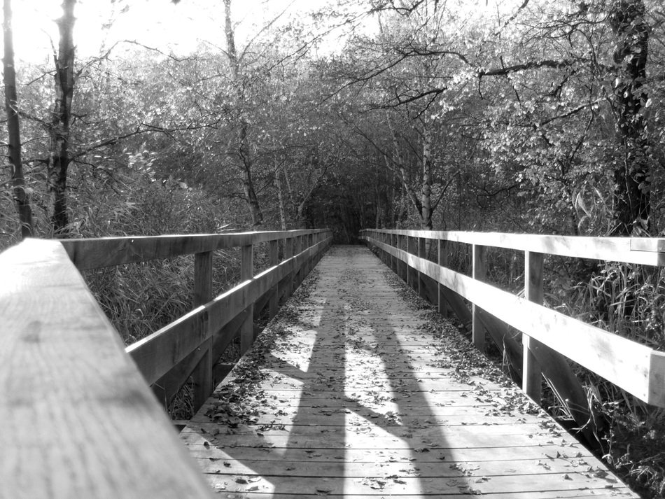 black and white image of a wooden bridge in nature