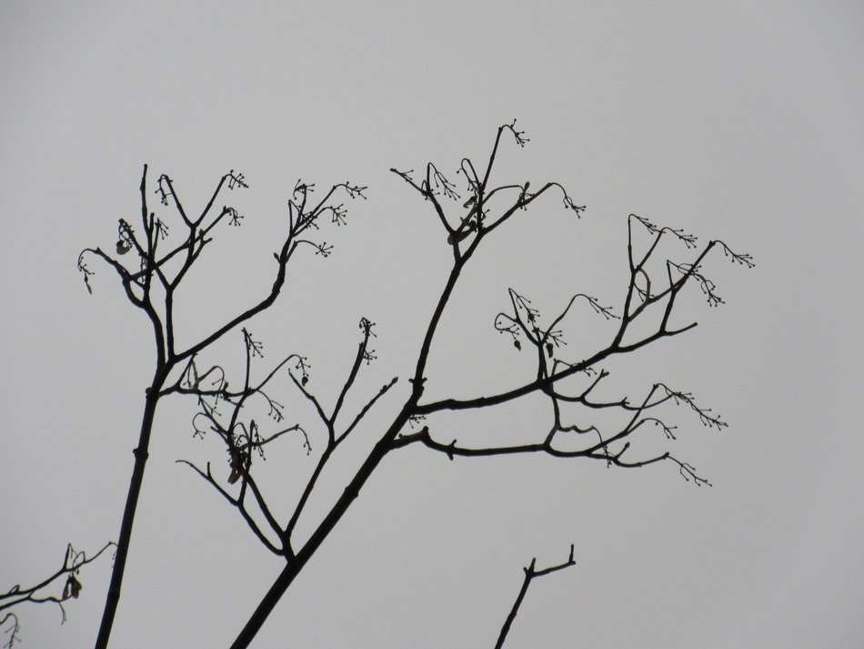 branches without leaves of a large tree against the winter sky