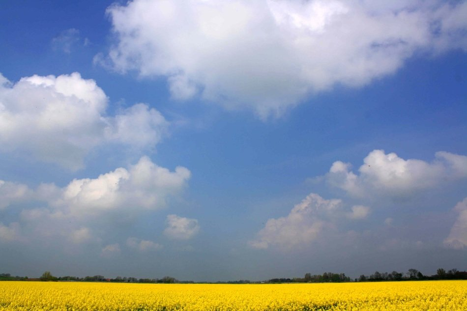 Blue summer sky with white clouds over a yellow rape field on beautiful landscape