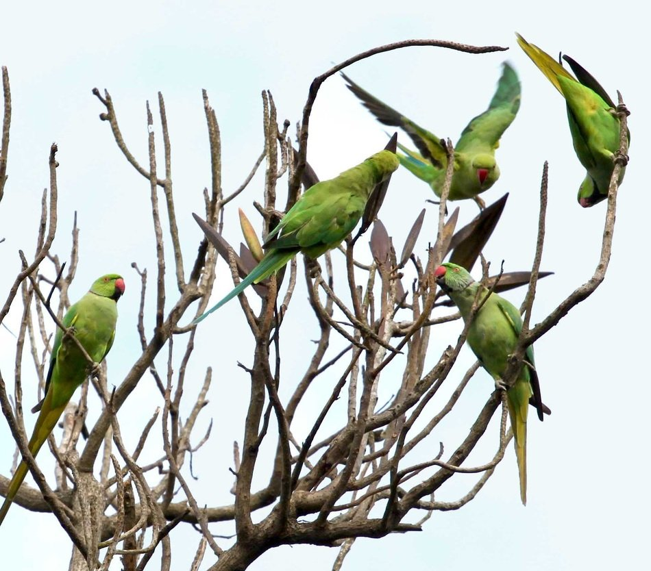Many beautiful colorful parrots on bare branches of a tree