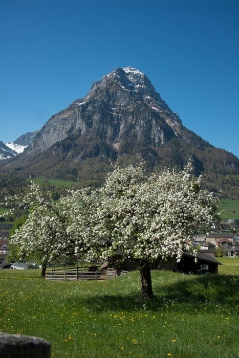 flowering trees in front of a mountain on a sunny day