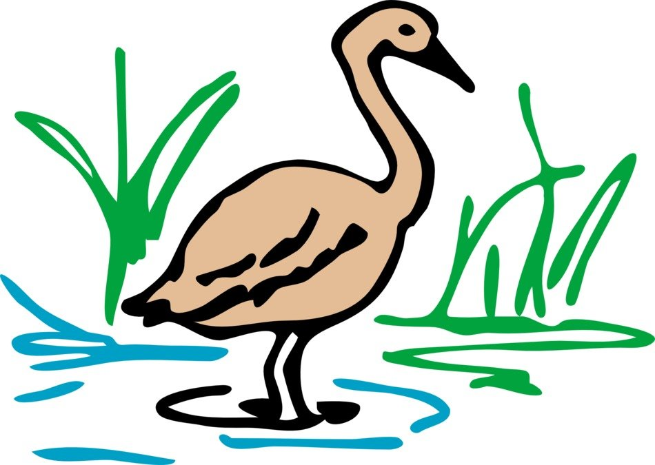 brown duck goose drawing