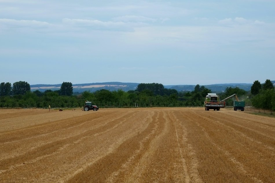 harvest field with cereals crop landscape on a sunny day