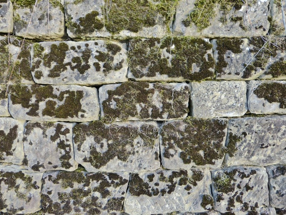 stone wall in green moss