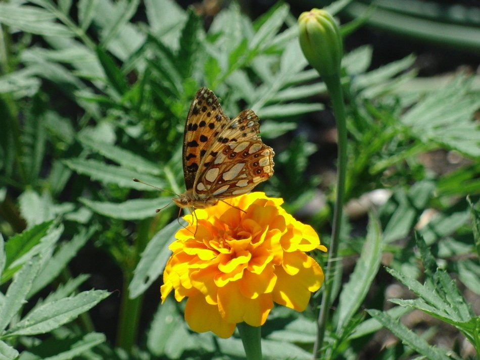 wild butterfly on the yellow garden flower