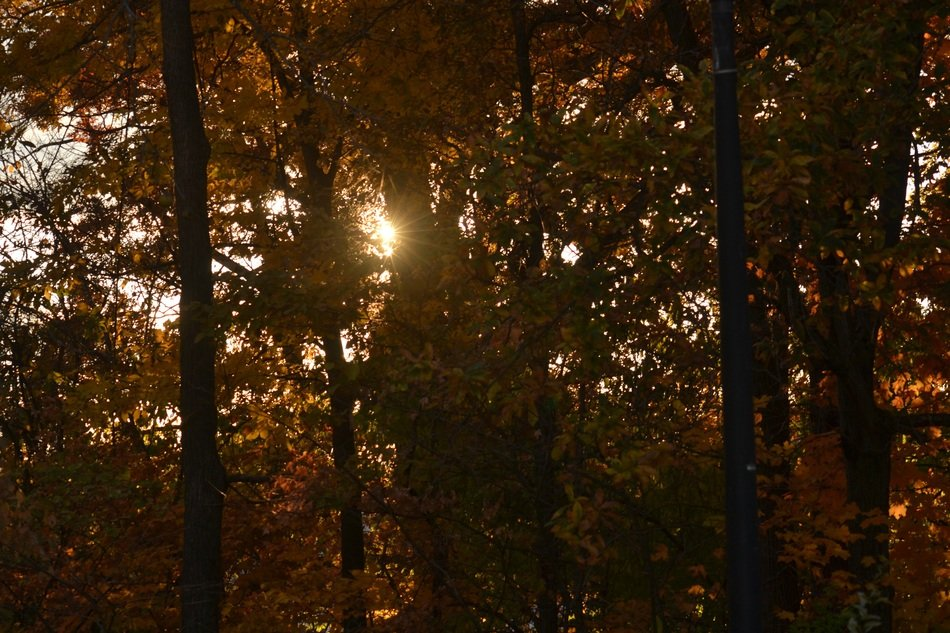 setting sun in the foliage of trees