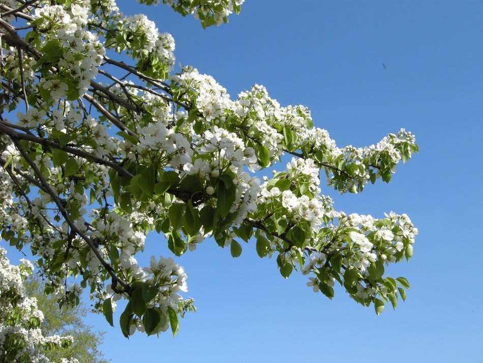 white flowering tree on a sunny day