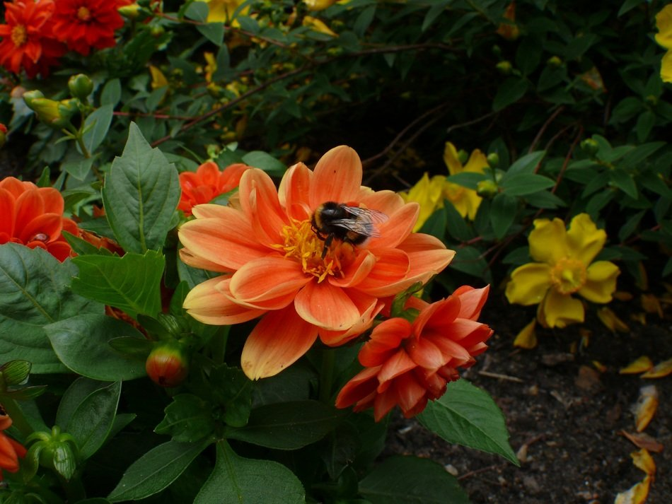 orange flowers with bees