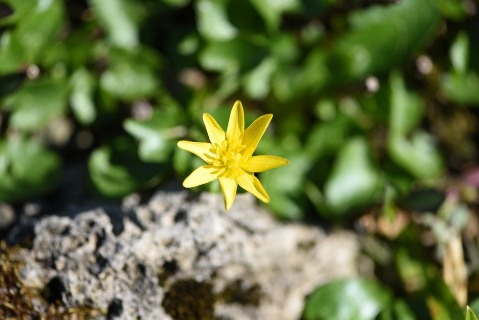 yellow flower with sharp petals on the grass