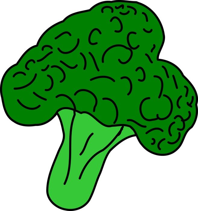 broccoli drawed