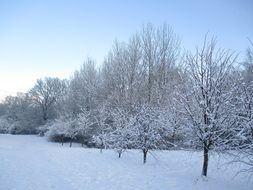 snowy trees in park, winter landscape, poland